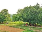 De pie bajo el árbol Duoi, patrimonio único de Vietnam en la tierra Xu Doai