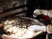 Oficio tradicional de sericultura en la aldea vietnamita de Co Chat