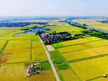 [Video] Positivas perspectivas del sector agropecuario y forestal de Vietnam