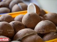 [Foto] Fabricante de dulces lleva a Ben Tre al mundo