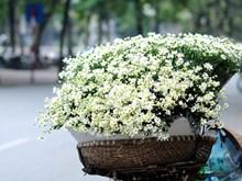 Hanoi, romántica ciudad de las margaritas
