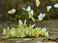 [Fotos] Parque Nacional Cuc Phuong, reserva de las mariposas