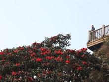 [Fotos] Valle de flores en la Cima de Fansipan