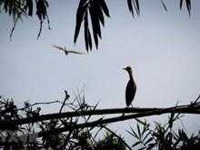 [Fotos] Parque de preservación Dong Thap Muoi, en la provincia sureña de Tien Giang
