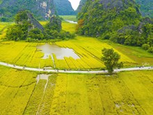 [Fotos] Turismo de Vietnam: la belleza de la temporada de cosecha de arroz en Ninh Binh