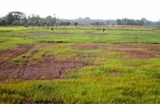 La progresiva salinización amenaza tierras de cultivo en Soc Trang