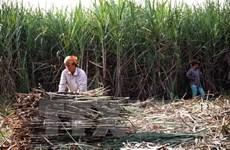 Vietnam busca mejorar competitividad del sector azucarero