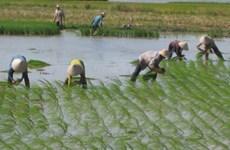 Thai Nguyen acelera desarrollo de nuevas zonas rurales