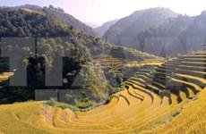 Mu Cang Chai: destino atractivo con escenas majestuosas