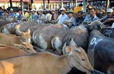 Vietnam, segundo mayor mercado de ganado vivo de Australia