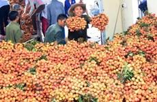 Ingreso por exportaciones de lichi de Bac Giang aumenta