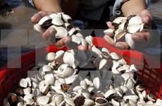 Exportaciones de moluscos de valvas totalizarán 85 millones USD