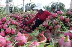 Oportunidades de exportación agrícola vietnamita a Sudcorea