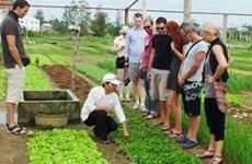 Aldea hortícola Tra Que entre los destinos atractivos de Vietnam