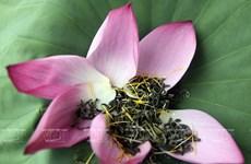 Tomar té aromatizado de loto, una costumbre de hanoyenses