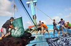 Ligero aumento de producción pesquera de Vietnam