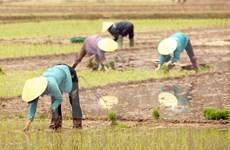 Busca subregión de Mekong reducir emisión de CO2 en cultivo arrocero