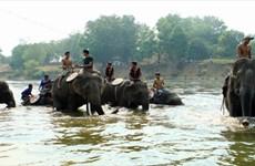"""Leyenda de """"tierra de elefantes"""" Buon Don"""