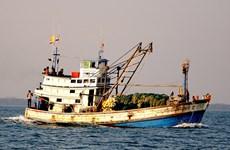 Detienen barcos tailandeses que pescan ilegalmente en mar vietnamita