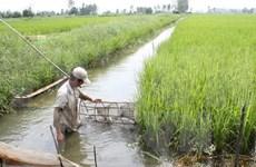 Mesa redonda hacia agricultura sostenible en Sudeste de Asia
