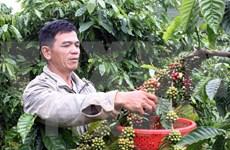 Robustecen Vietnam e India comercio agrícola