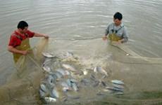 Planea Vietnam ampliar cría de tilapia- sector potencial de país