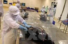 Exportación vietnamita de atún a Canadá registra fuerte aumento
