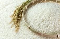 Indonesia ve obligatoria importación de arroz por El Niño