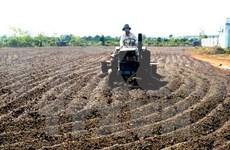 Empresas japonesas interesadas en agricultura en Vietnam