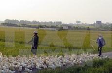Detectan brote de gripe aviar A/H5N6 en Nam Dinh