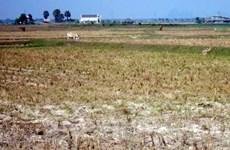 Vietnam acelera prevención contra sequías y salinización