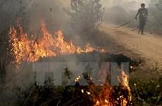 Disminuye cantidad de puntos calientes de incendios en Indonesia