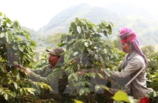 Ministro de agricultura: Ampliación de mercado es cuestión vital