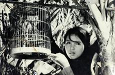 """Amigos alemanes """"repatrían"""" más de 200 filmes valiosos sobre Vietnam"""