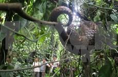 Alerta sobre comercio ilegal de animales salvajes por internet