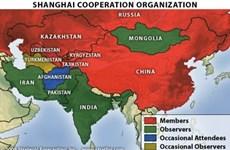 Organización de Cooperación de Shanghái forja colaboración con ASEAN