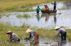 Más de 70 por ciento de empresas en Delta Mekong dañadas por cambio climático