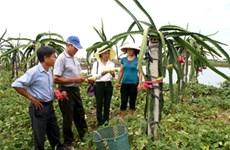 Acelera NinhBinh esfuerzos en construcción de nueva ruralidad