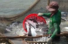 Busca Vietnam medidas para evitar interrupción de exportación de pescados a EE.UU.