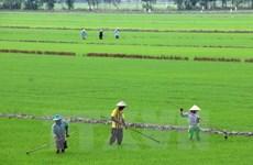 Éxitos en cumplir metas del milenio muestran garantía de DD.HH. en Vietnam