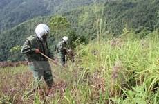 Binh Dinh pide apoyo de Koica a la neutralización de bombas sin detonar