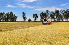 Vietnam y Japón cooperan en desarrollo agrícola de alta tecnología