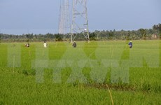 Japón cumplirá compromisos de cooperación agrícola con Vietnam, dice ministro