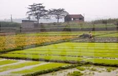 Fomentan integración de agricultura vietnamita