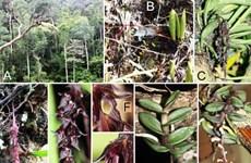 Descubren ocho nuevas especies de orquídea en Altiplanicie Occidental