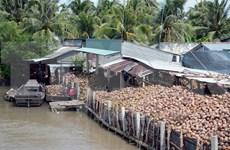 Ben Tre: Productos de coco aportan 30 por ciento ingresos de exportaciones