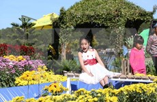 Da Lat atrae a 500 mil visitantes en Festival de Flores