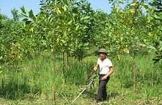 Tuyen Quang se empeña en desarrollo forestal en 2016