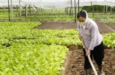 Vietnam busca mejorar operación de cooperativas en época de integración