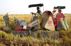 Vietnam aspira a 31 mil millones de dólares de exportaciones agrícolas en 2016